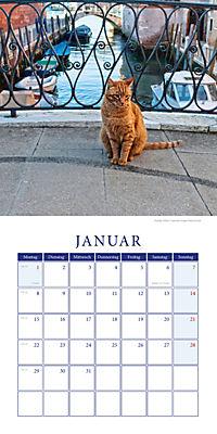Katzen auf Reisen Broschurkal. 2018 - Produktdetailbild 1