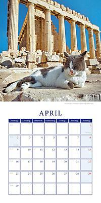 Katzen auf Reisen Broschurkal. 2018 - Produktdetailbild 4