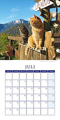Katzen auf Reisen Broschurkal. 2018 - Produktdetailbild 7