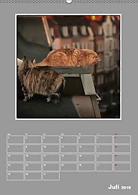 Katzen Blues / Planer (Wandkalender 2019 DIN A2 hoch) - Produktdetailbild 7