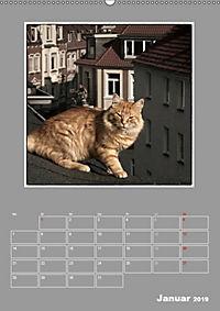 Katzen Blues / Planer (Wandkalender 2019 DIN A2 hoch) - Produktdetailbild 1