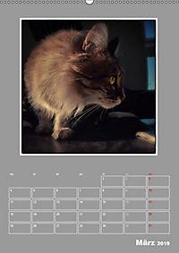 Katzen Blues / Planer (Wandkalender 2019 DIN A2 hoch) - Produktdetailbild 3