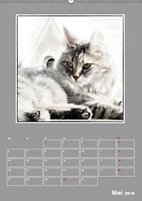 Katzen Blues / Planer (Wandkalender 2019 DIN A2 hoch) - Produktdetailbild 5