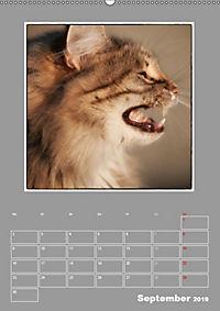 Katzen Blues / Planer (Wandkalender 2019 DIN A2 hoch) - Produktdetailbild 9
