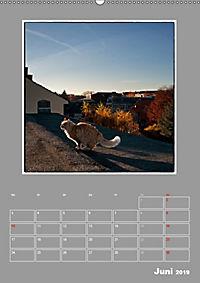 Katzen Blues / Planer (Wandkalender 2019 DIN A2 hoch) - Produktdetailbild 6