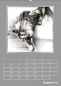 Katzen Blues / Planer (Wandkalender 2019 DIN A2 hoch) - Produktdetailbild 8