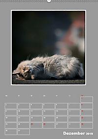 Katzen Blues / Planer (Wandkalender 2019 DIN A2 hoch) - Produktdetailbild 12