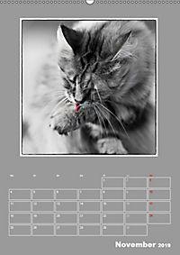 Katzen Blues / Planer (Wandkalender 2019 DIN A2 hoch) - Produktdetailbild 11