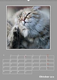Katzen Blues / Planer (Wandkalender 2019 DIN A2 hoch) - Produktdetailbild 10