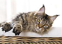 Katzen / Cats 2019 - Produktdetailbild 3