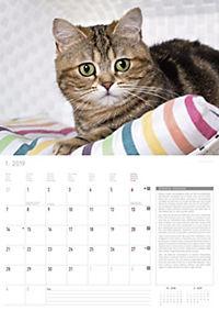 Katzen / Cats 2019 - Produktdetailbild 1