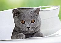 Katzen / Cats 2019 - Produktdetailbild 4