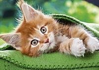 Katzen / Cats 2019 - Produktdetailbild 6
