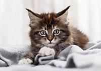 Katzen / Cats 2019 - Produktdetailbild 9