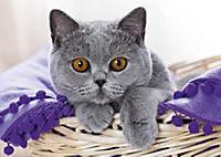 Katzen / Cats 2019 - Produktdetailbild 10