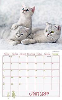 Katzen Kalenderpaket 2018, 6-tlg. - Produktdetailbild 1