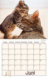 Katzen Kalenderpaket 2018, 6-tlg. - Produktdetailbild 3