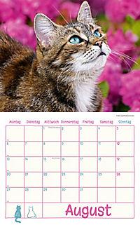 Katzen Kalenderpaket 2018, 6-tlg. - Produktdetailbild 4