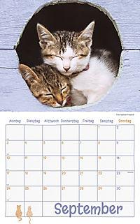 Katzen Kalenderpaket 2018, 6-tlg. - Produktdetailbild 5