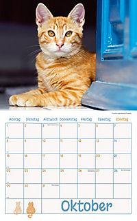 Katzen Kalenderpaket 2018, 6-tlg. - Produktdetailbild 6