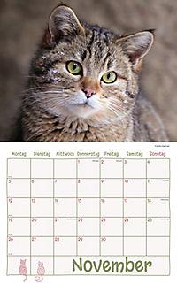 Katzen Kalenderpaket 2018, 6-tlg. - Produktdetailbild 7