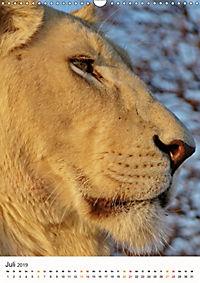 KATZEN PORTRAITS Weiße Löwen aus Afrika (Wandkalender 2019 DIN A3 hoch) - Produktdetailbild 7