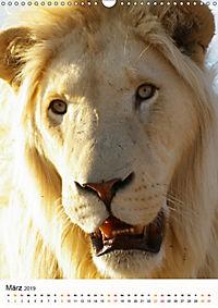 KATZEN PORTRAITS Weiße Löwen aus Afrika (Wandkalender 2019 DIN A3 hoch) - Produktdetailbild 3