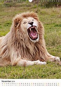 KATZEN PORTRAITS Weiße Löwen aus Afrika (Wandkalender 2019 DIN A3 hoch) - Produktdetailbild 11