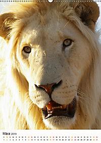 KATZEN PORTRAITS Weisse Löwen aus Afrika (Wandkalender 2019 DIN A2 hoch) - Produktdetailbild 3