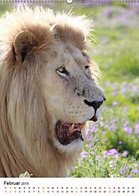 KATZEN PORTRAITS Weisse Löwen aus Afrika (Wandkalender 2019 DIN A2 hoch) - Produktdetailbild 2