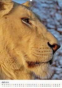 KATZEN PORTRAITS Weisse Löwen aus Afrika (Wandkalender 2019 DIN A2 hoch) - Produktdetailbild 7