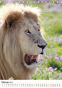 KATZEN PORTRAITS Weiße Löwen aus Afrika (Tischkalender 2019 DIN A5 hoch) - Produktdetailbild 2