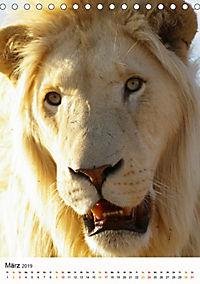 KATZEN PORTRAITS Weiße Löwen aus Afrika (Tischkalender 2019 DIN A5 hoch) - Produktdetailbild 3