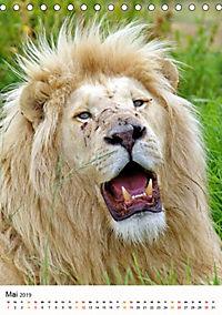 KATZEN PORTRAITS Weiße Löwen aus Afrika (Tischkalender 2019 DIN A5 hoch) - Produktdetailbild 5