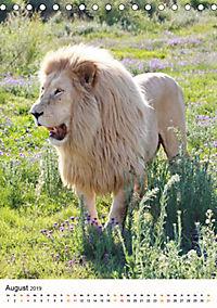 KATZEN PORTRAITS Weiße Löwen aus Afrika (Tischkalender 2019 DIN A5 hoch) - Produktdetailbild 8