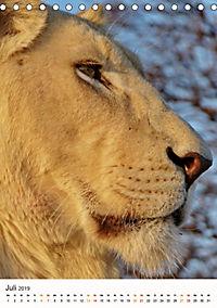 KATZEN PORTRAITS Weiße Löwen aus Afrika (Tischkalender 2019 DIN A5 hoch) - Produktdetailbild 7
