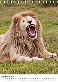KATZEN PORTRAITS Weiße Löwen aus Afrika (Tischkalender 2019 DIN A5 hoch) - Produktdetailbild 11