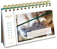 Katzenglück 2018 - Produktdetailbild 4