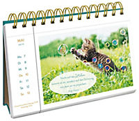 Katzenglück 2018 - Produktdetailbild 8
