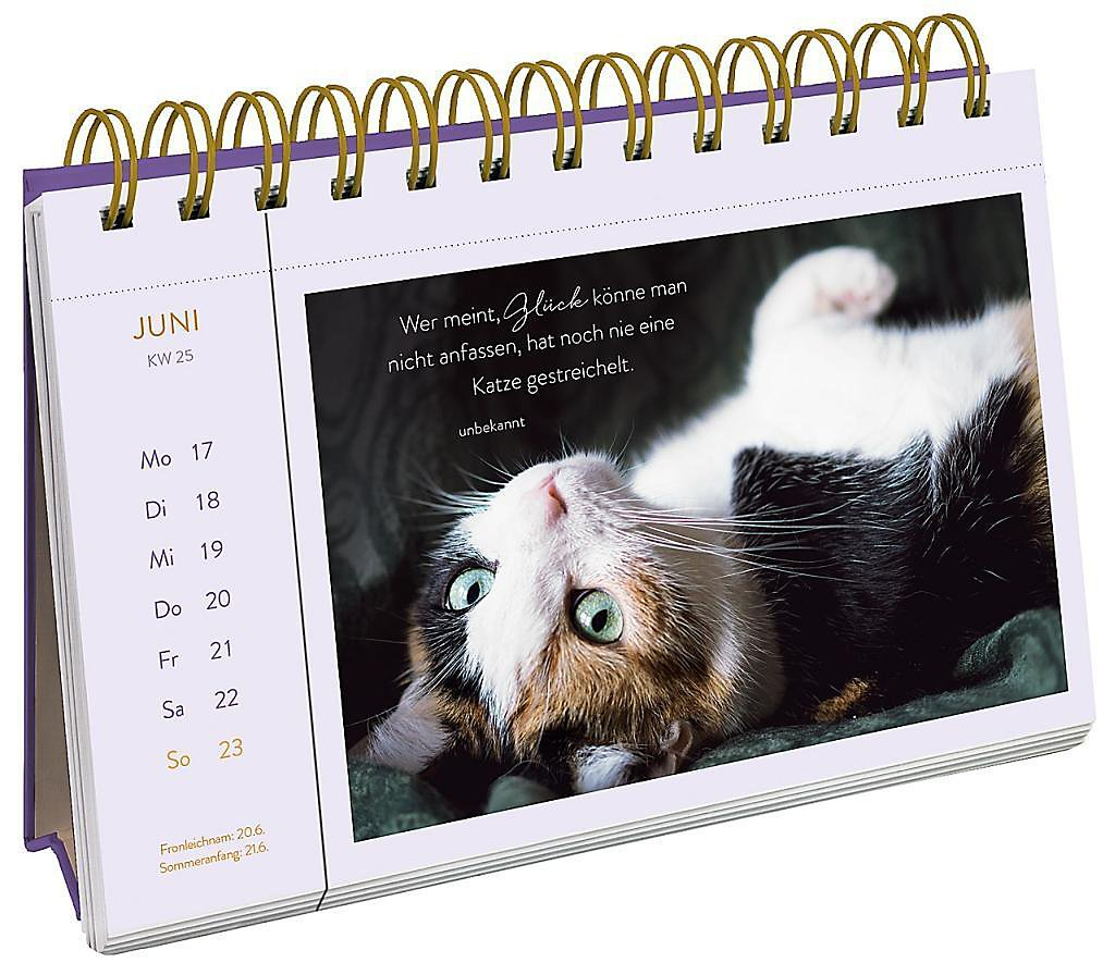 katzengl ck 2019 kalender g nstig bei bestellen. Black Bedroom Furniture Sets. Home Design Ideas