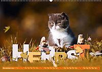 Katzenkinder - Britisch Kurzhaar (Wandkalender 2019 DIN A2 quer) - Produktdetailbild 11
