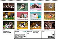 Katzenkinder - Britisch Kurzhaar (Wandkalender 2019 DIN A2 quer) - Produktdetailbild 13