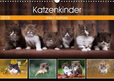 Katzenkinder - Britisch Kurzhaar (Wandkalender 2019 DIN A3 quer), Janina Bürger