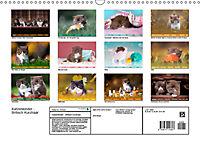 Katzenkinder - Britisch Kurzhaar (Wandkalender 2019 DIN A3 quer) - Produktdetailbild 13