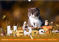 Katzenkinder - Britisch Kurzhaar (Wandkalender 2019 DIN A3 quer) - Produktdetailbild 11