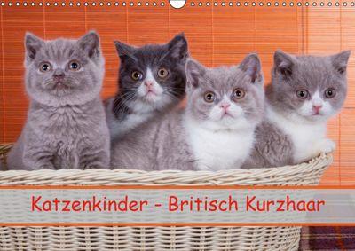 Katzenkinder Britisch Kurzhaar (Wandkalender 2019 DIN A3 quer), Gabriela Wejat-Zaretzke