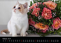 Katzenkinder Britisch Kurzhaar (Wandkalender 2019 DIN A3 quer) - Produktdetailbild 2