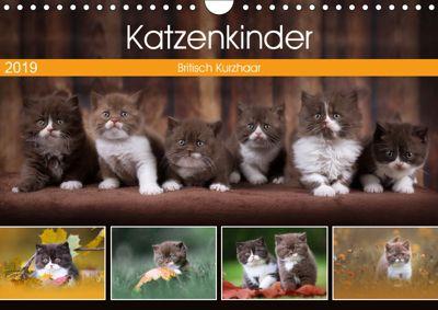 Katzenkinder - Britisch Kurzhaar (Wandkalender 2019 DIN A4 quer), Janina Bürger