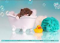 Katzenkinder - Britisch Kurzhaar (Wandkalender 2019 DIN A2 quer) - Produktdetailbild 7