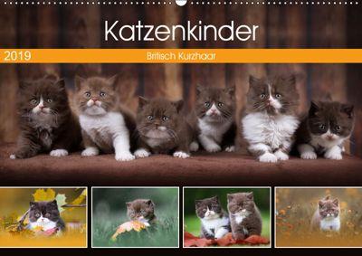 Katzenkinder - Britisch Kurzhaar (Wandkalender 2019 DIN A2 quer), Janina Bürger